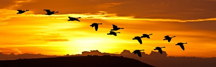 birds flying at sunrise